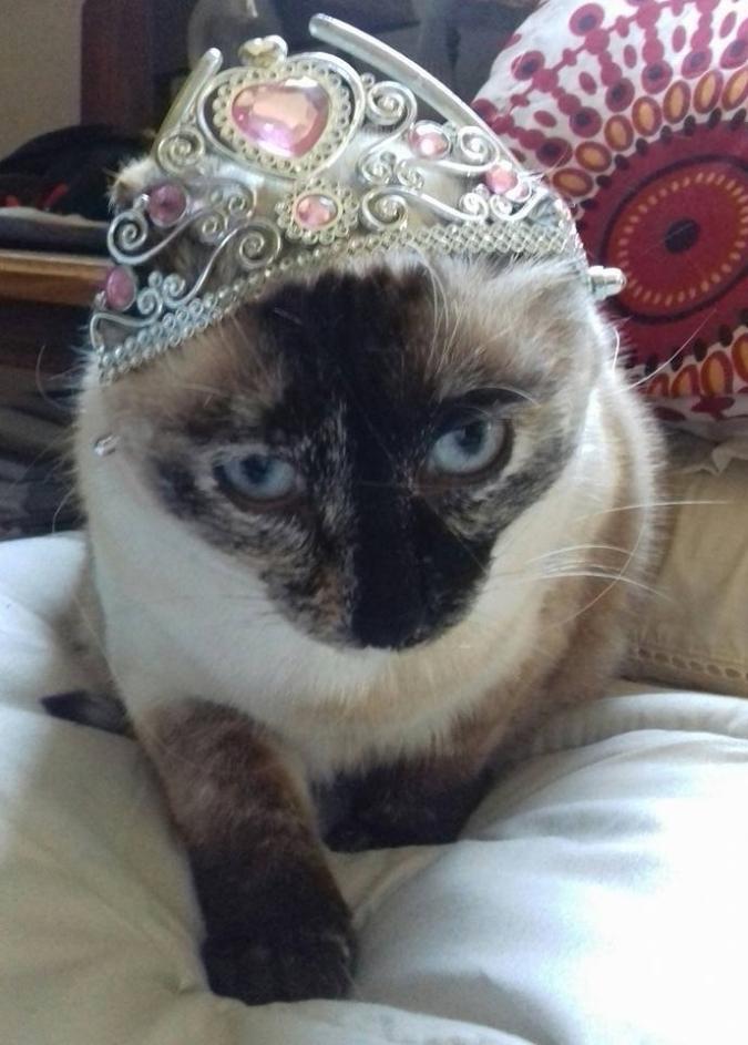 kittie2