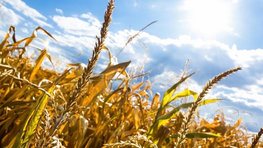 cornfields pixabay
