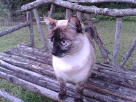 kittie 3