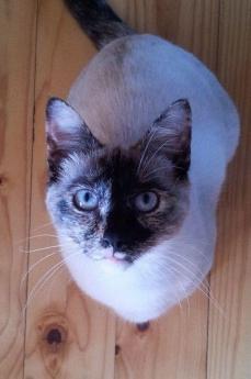 kittie kat