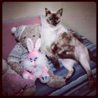 kitty7