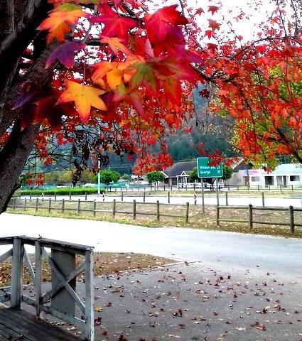 autumn at play