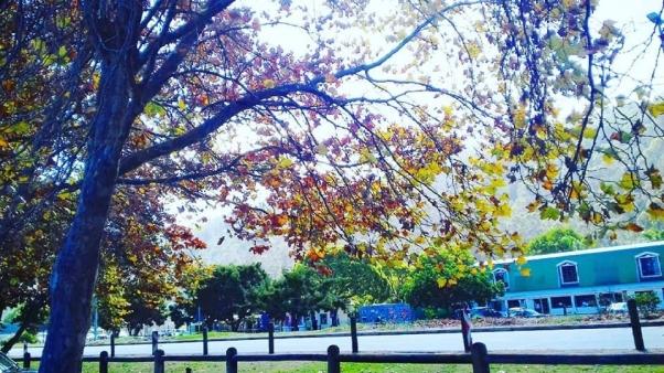 autumn wordless wednesday