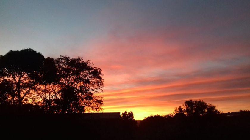 tangerine skies