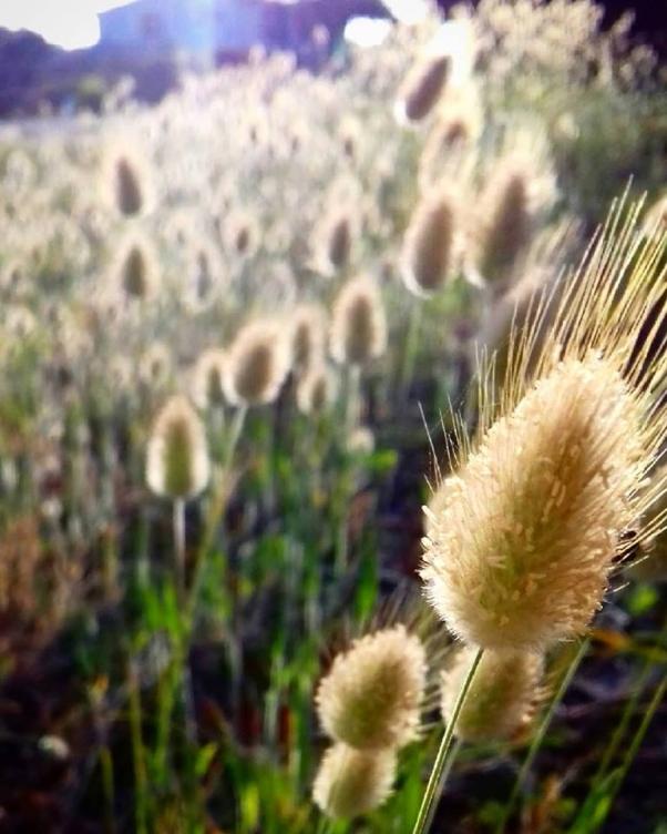 bristling grasslands