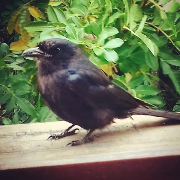 birds sang