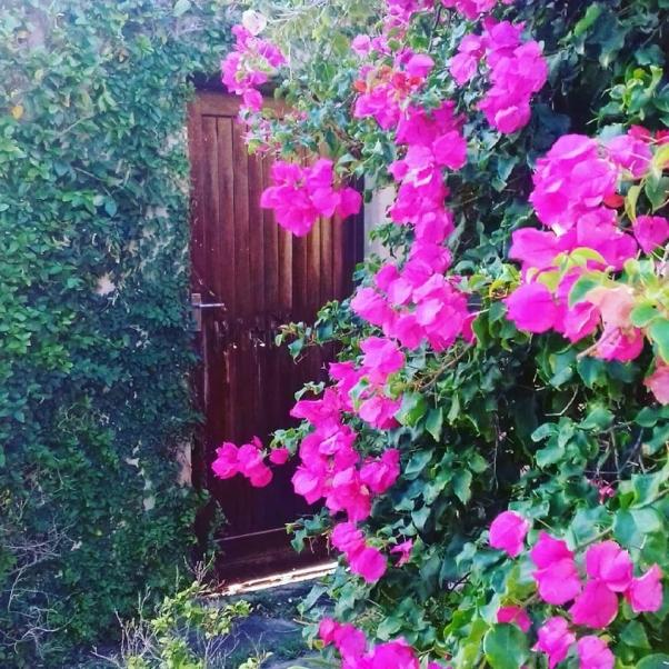 secret gardens.jpg