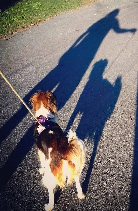 elongated shadows