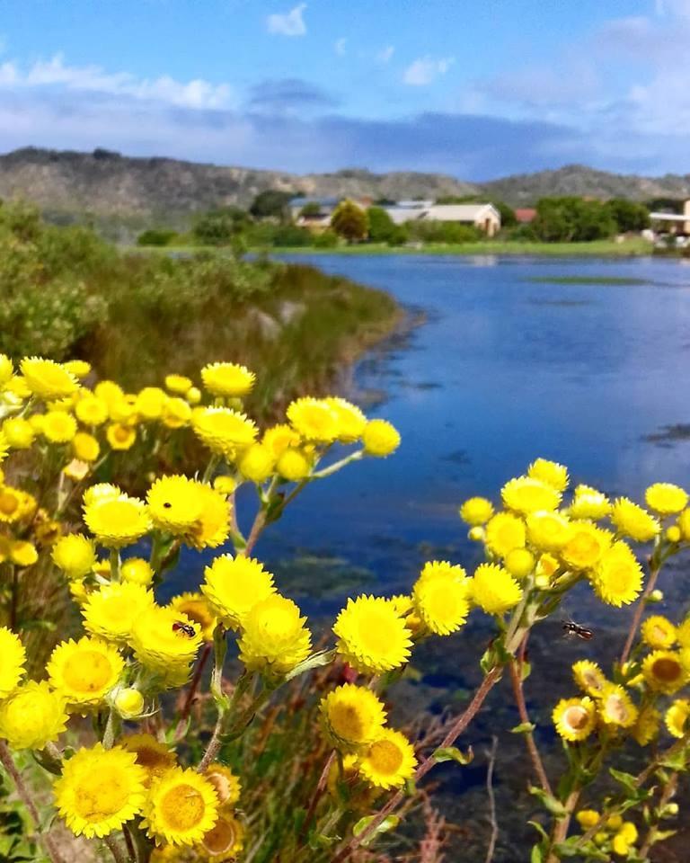 wild flowers on the vlei