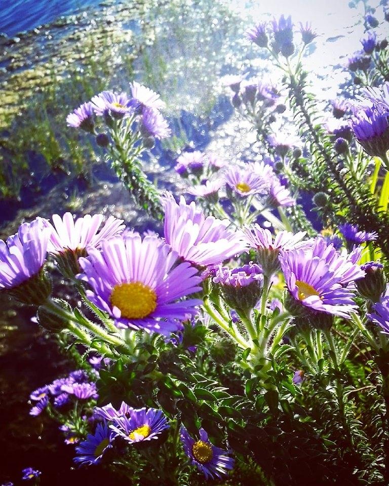 flowers near the lagoon