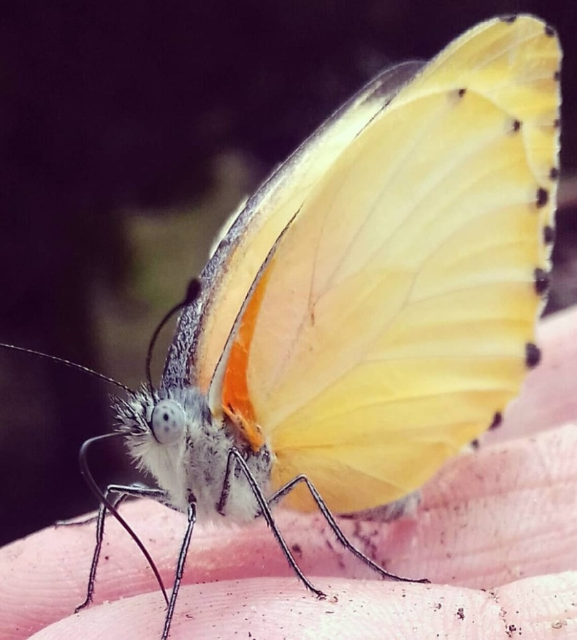 touched by a butterfly