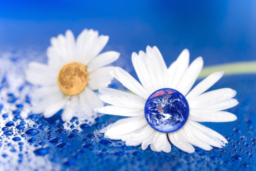 daisy with earth as centre