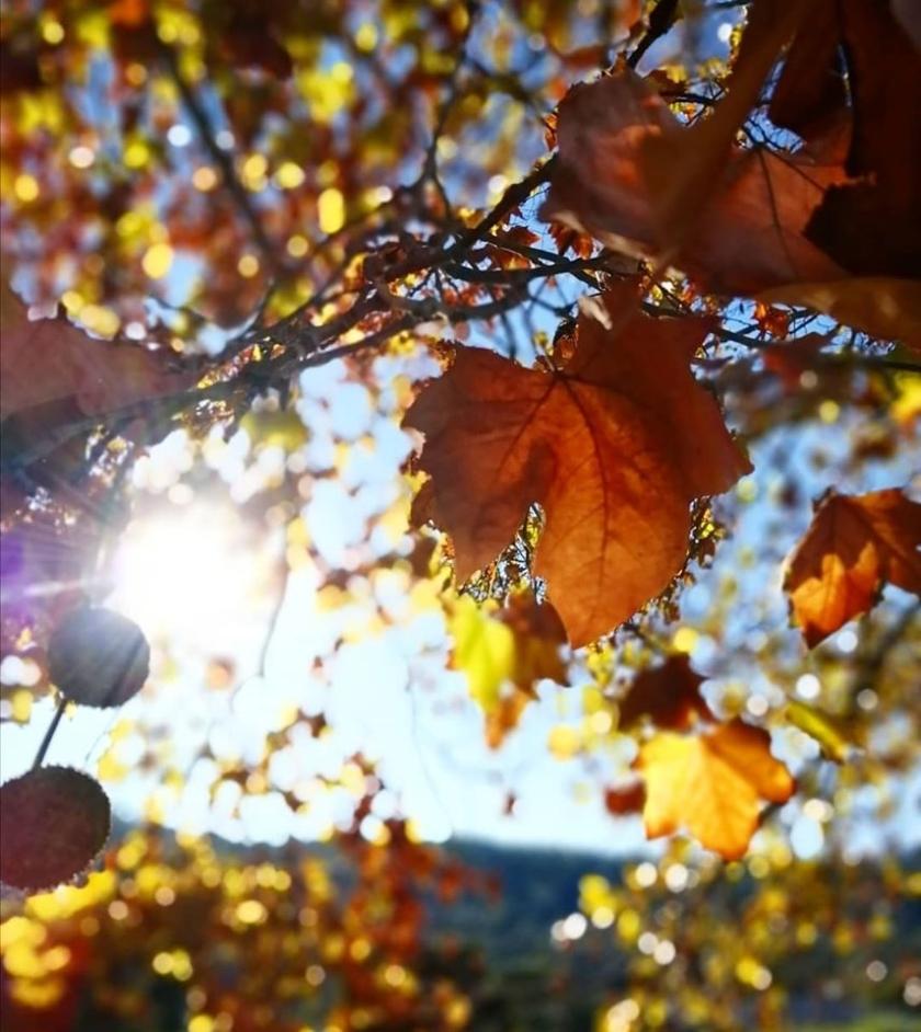 autumns gaze
