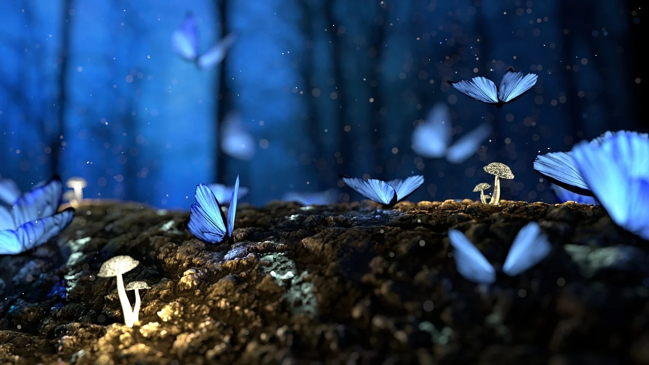 forest butterflies