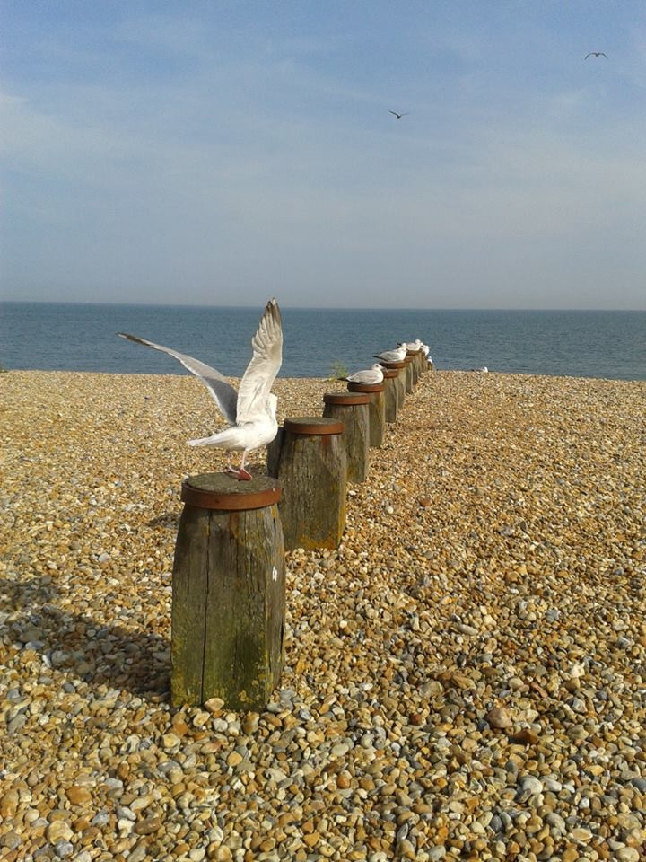 seagulls in eastbourne