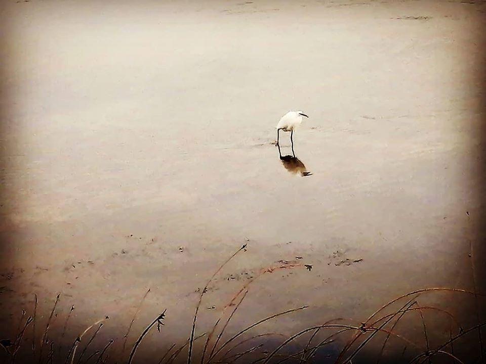 lanky birds